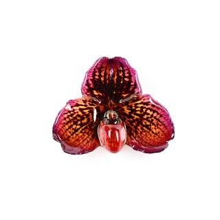 Медальон Орхидея Белатулум, лилаво-бежова
