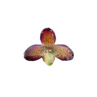 Медальон Орхидея Белатулум, лилава