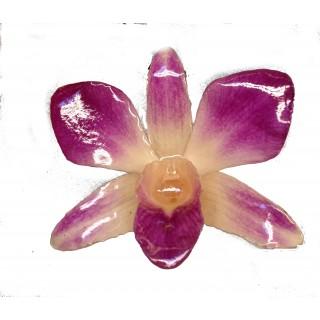 Медальон Орхидея Дендорбиум, лилаво-кремава