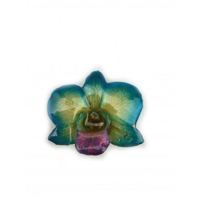 Медальон Орхидея Дендорбиум Луси, тюркоаз