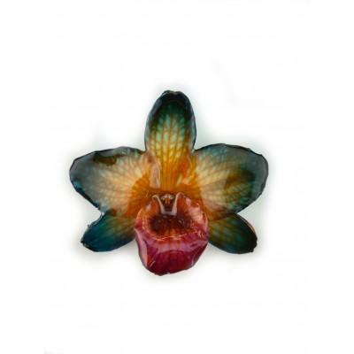 Медальон Орхидея Нобайл Дендорбиум, 2 нюанса синьо