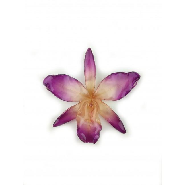 Медальон Орхидея Нобайл Дендробиум, фушия