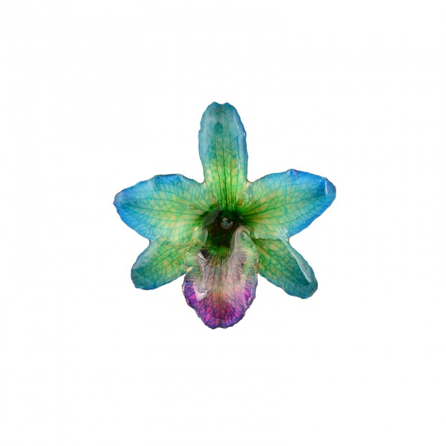 Медальон Орхидея Нобайл, хибрид, синьо-лилава