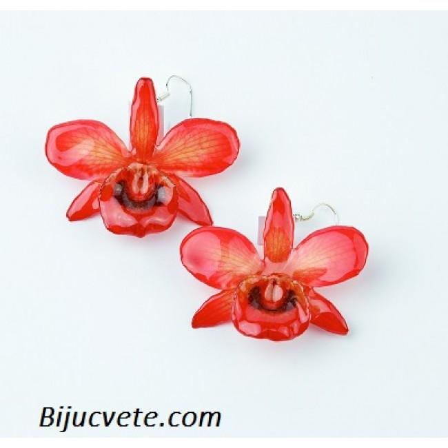 Обици Орхидея Кризотоксум, червени