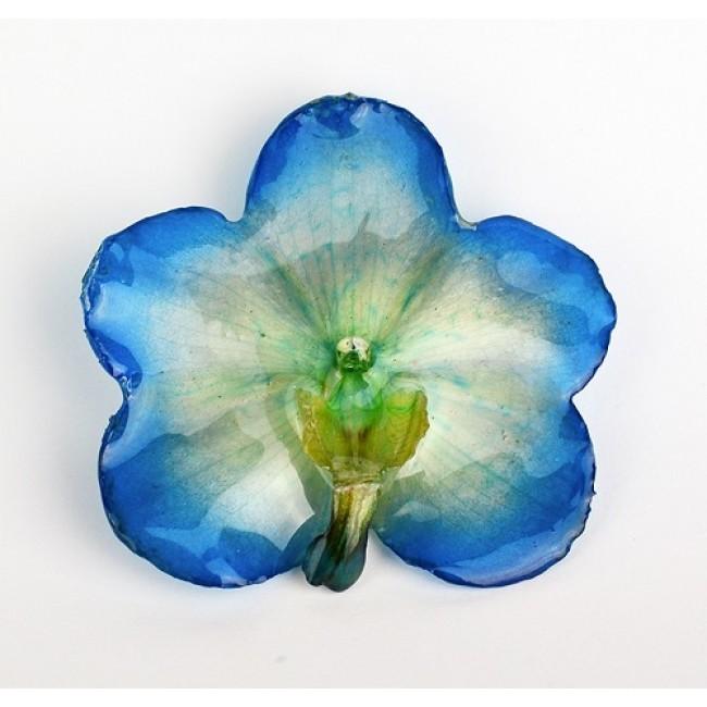 Медальон Орхидея Ванда, синя