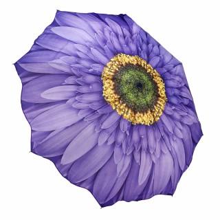 Сгъваем чадър, Лилава маргарита
