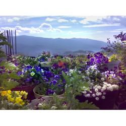 Откъде идват сребърните бижута с истински цветя